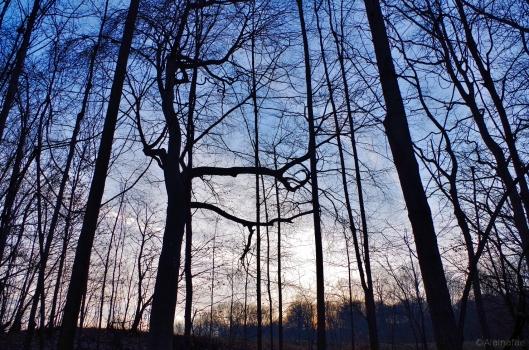 Winter Solstice 2014 Sun Setting Over the Field Near VS